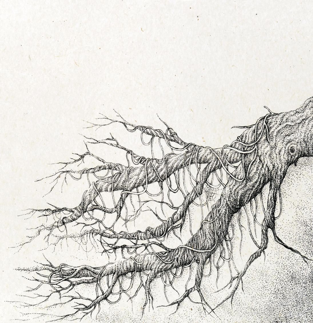 『少年と光の木』 朽ちた木 A boy and a tree of light - a rotten tree - w290×w290mm 2016 lithograph